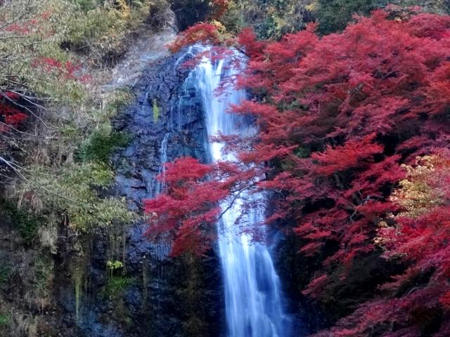 箕面大滝周辺の紅葉の見頃は11月初旬~今からでも十分間に合いますので、ぜひチェックしてみてくださいね。