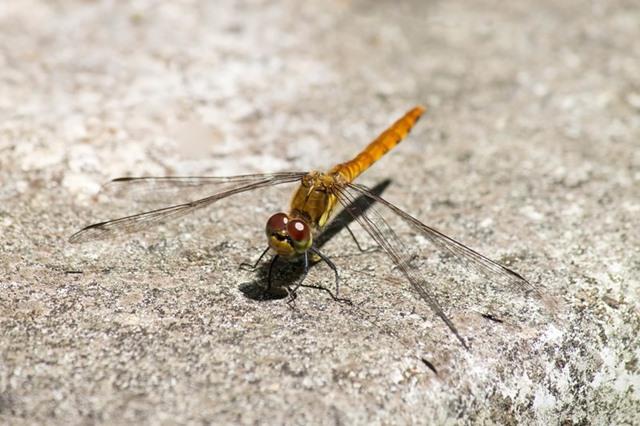 箕面公園昆虫館は、海外産の昆虫を標本をはじめ、箕面公園に生息している生きた昆虫などを数多く展示しています。